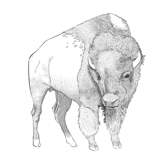 A pen & ink style digital drawing of a bison.