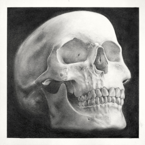 A realistic charcoal rendering of a human skull on a dark background.